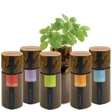 Kitchen Herb Garden Kit Hydroponic Herb Garden Hydroponic Garden Design Ideas Vertical