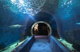 aquarium for office. Dr Sid Solomon Office Hallway Aquarium For Q