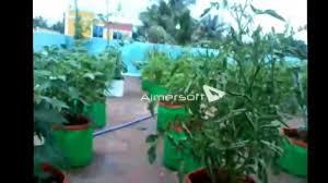 Terrace Kitchen Garden Maadi Thottam Organic Terrace Garden Chennai Avadi Youtube