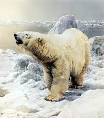 on the ice polar bear by carl brenders