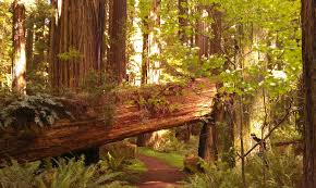 Upload photos view 29 photos. Grizzly Creek Redwoods Sp