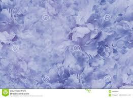 Bloemen Blauw Witte Mooie Achtergrond Behang Van Bloemen Lichtblauwe