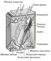 Реферат Кожные заболевания и меры их профилактики ru Различают