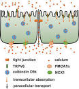 Image result for cheese virus calcium absorption metabolism