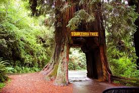 drive through trees