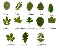soorten bomen bladeren