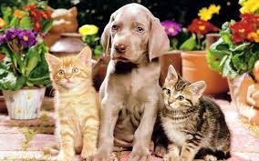 dogs and cats wallpaper. Brilliant Wallpaper Teddybear64 Images Dog And Cats Wallpaper HD Wallpaper Background Photos On Dogs And U