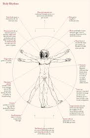 Body Rhythms Laphams Quarterly