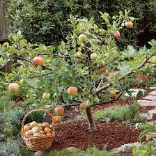 Best 25 Organic Fruit Trees Ideas On Pinterest  Fruit Garden How Often Should I Water My Fruit Trees