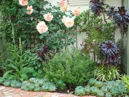 Small Picture succulent garden design How to design succulent garden