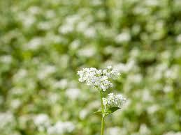 「花の写真 無料」の画像検索結果
