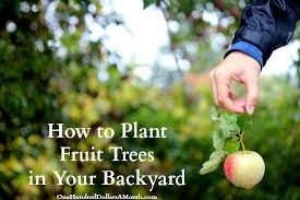 How To Plant Fruit Trees In Your Backyard  One Hundred Dollars A When Do You Plant Fruit Trees