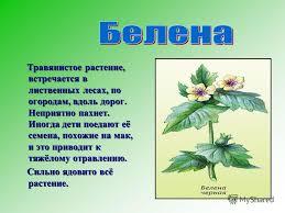 Презентация на тему Окружающий мир класс Тема Ядовитые  4 Травянистое растение