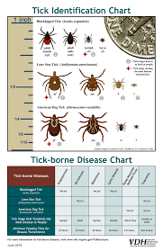 Cdc Tick Identification Chart Tb Disease Manualzz Com