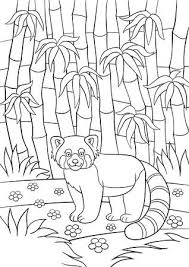 Rode Panda Fotos Afbeeldingen En Stock Fotografie 123rf