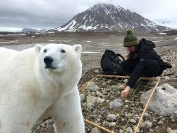 Does Polar Bear Hair Conduct Light And Therefore Heat About Interact Bloggers Arctic Research