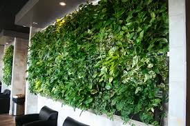 LiveWall Green Wall Enlivens A Peet S Coffee Tea Store At An