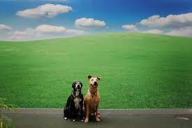 Πώς λέγεται ο σκύλος στο Ζάλοβο;