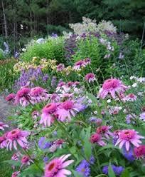 Small Picture Perennial Gardens Garden Design