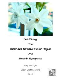 Paper White Flower Bulb Bulb Biology The Paperwhite Narcissus Flower Project And Hyacinth Hy
