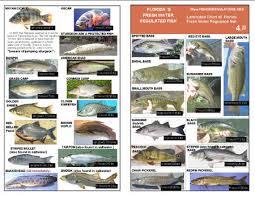 Laminated Florida Fish Identification Chart