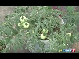 create a kitchen garden on the terrace