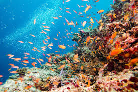 Australian Reef Fish Species Chart The Great Barrier Reef Is In Serious Trouble These Fish Can
