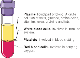 elements of blood diagram elements database wiring diagram bloodc12