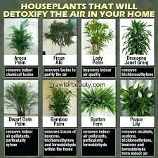 best best indoor house plants indoor plants that clean the air yahoo image search results indoor best best indoor house plants