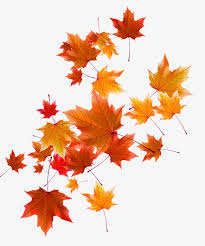 Fall Images Free Autumn Leaves Fall Defoliation Autumn Png And Vector For Free