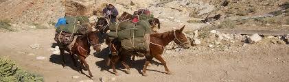 Image result for horse carry pack