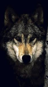 Wolf Wallpaper Iphone 8