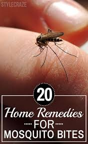 Best 25 Home reme s for mosquito ideas on Pinterest