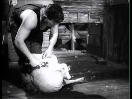 Shearing Technique (short version) (1958)   Sheep shearing, Shearing,  Techniques