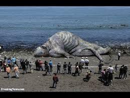 sea monster found 2014. Exellent Sea GIANT SEA MONSTER FOUND DEAD IN KHMER KROM CAMBODIA NOVEMBER 21 2013  EXPLAINED In Sea Monster Found 2014 YouTube