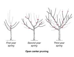 Growing Stone Fruits In The Home Garden Umn Extension