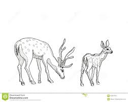 Hand Drawn Realistic Sketch Of Deers Stock Illustration