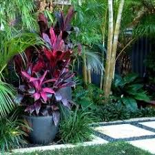 Small Picture 647 best Tropical Garden Ideas images on Pinterest Tropical