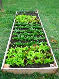 luxury landscape fabric in vegetable garden black landscapeic how to install and use l raised bed