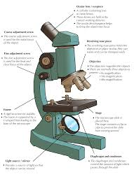 What Kind Of Light Source Is On A Microscope Molecular Make Up Of Cells Cells The Basic Units Of Life