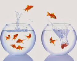 goldfish wallpaper desktop. Interesting Goldfish Goldfish Wallpaper For Walls Inside Wallpaper Desktop