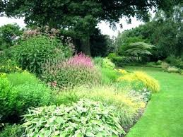 backyard privacy plants creating in ideas for fence trees shrubs bushes best on patio to create