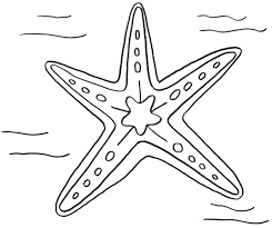 Small Picture Starfish Coloring Pages