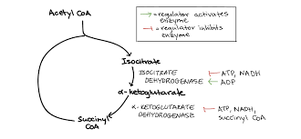 Regulation Of Cellular Respiration Article Khan Academy