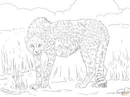 Small Picture Asiatic Cheetah coloring page Free Printable Coloring Pages