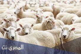 ماذا يقال عند ذبح الأضحية إسلام ويب - المصري نت