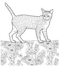 Gatticats 25 Disegni Da Colorare Per Adulti E Ragazzi Gatto