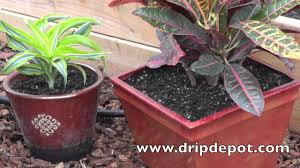 how to setup a drip irrigation system for containers potted plants you