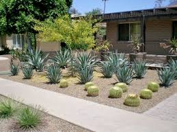 Small Picture Drought Resistant Yards Drought Tolerant Yard Picmia With Drought