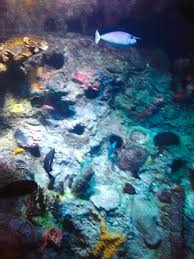 Rocks under water and fish Photograph by Tabatha Wimmer